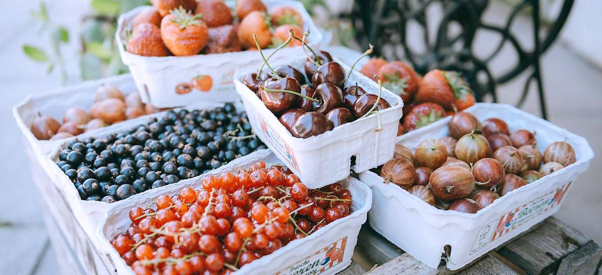 berrys-hummelblumen